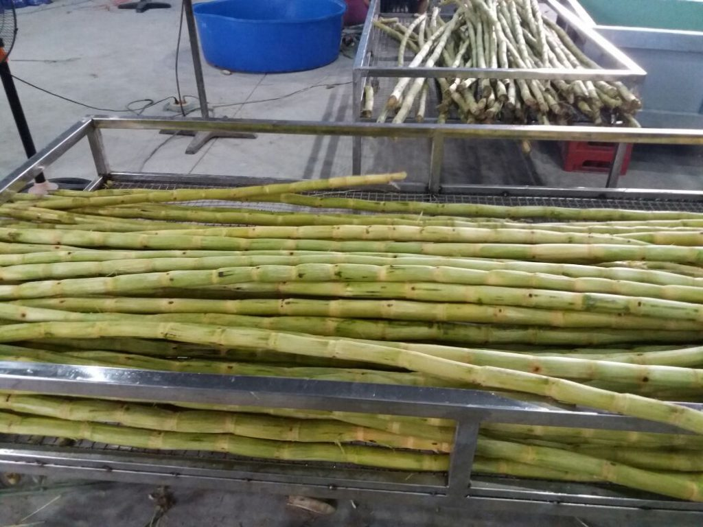 where to buy sugar cane stalks