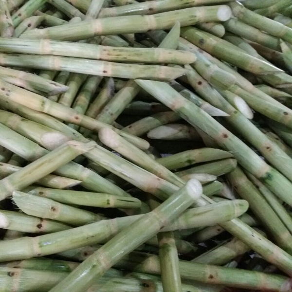 Sugar Cane Sticks Suppliers In Vietnam Good Quality And