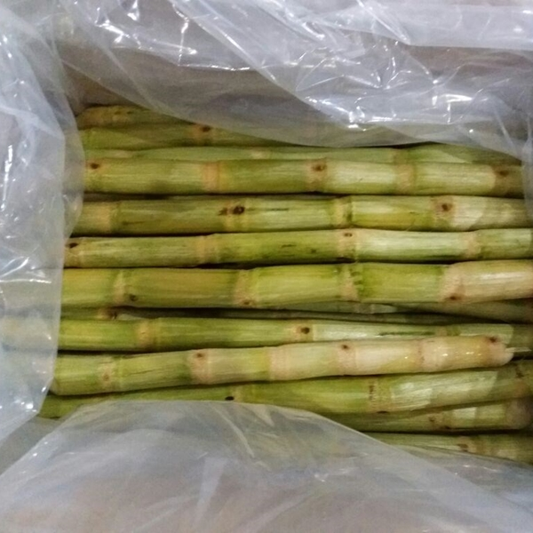 Sugar Cane For Sale In Vietnam Good Quality And
