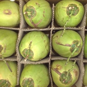 green coconut suppliers