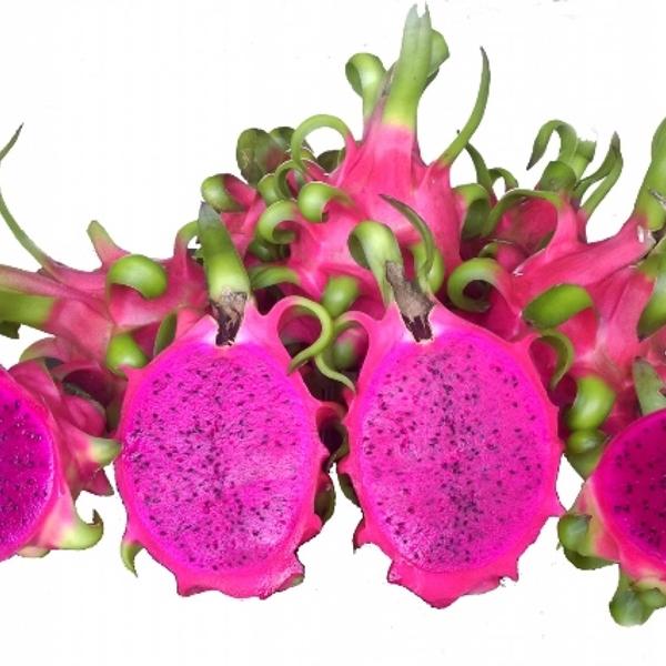 Purple pitaya fruit suppliers